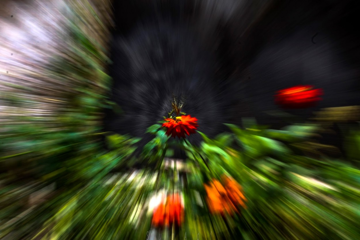 Zooming Photography